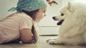 babies and pets having fun together funny and cute baby u0026 animal