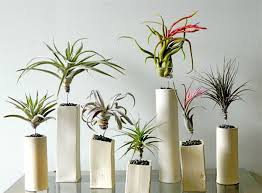 designs ideas living space with rubber indoor plant in red pot