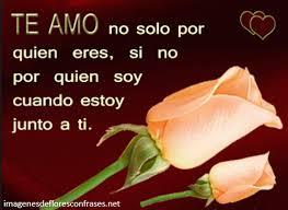 bonitas de rosas rojas con frases de amor imagenes de amor facebook rosas rojas de amor con frases romanticas imagenes de flores con