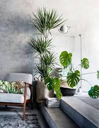 home interior plants 185 best house plants gardening zero waste images on