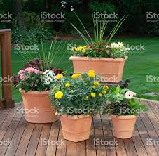 terra cotta outdoor patio flower planters on wood deck stock photo
