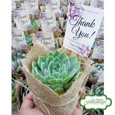 pin by go green giveaways on succulents philippines wedding