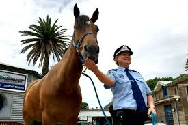 New Years Eve Decorations Au by New Year U0027s Eve Sydney Police Horses Ready For Crowds Fireworks