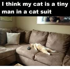 Cat Suit Meme - l think my cat is a tiny man in a cat suit meme on me me