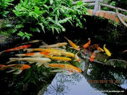 preety 7 outdoor fish pond design on fish pond design ideas
