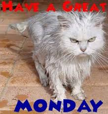 Mad Kitty Meme - 50 funny monday quotes