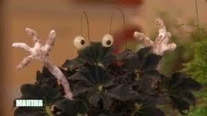 Haunted Halloween by Video Haunted Halloween Houseplants Martha Stewart
