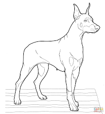 doberman coloring page free printable coloring pages