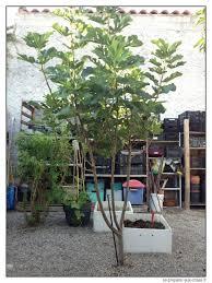 Abris De Jardin Cerisier by Le Bouturage Permet De Reproduire Gratuitement Les Plantes Se