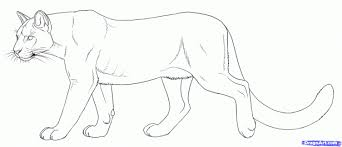 mountain lion coloring free coloring pages art coloring