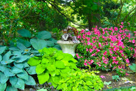 Backyard Trees For Shade - best shade plants for landscaping pictures plans ideas