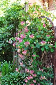 three dogs in a garden honeysuckle heavenly smell garden and