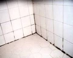 How To Get Bathroom Grout White Again - best way to remove mold and mildew from tile grout