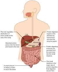 Nose Anatomy And Physiology Uga Anatomy And Physiology 2 Lab Manual