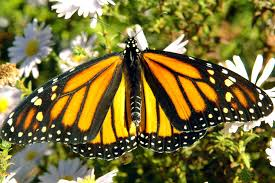 plants native to new jersey a garden buffet for birds bees and butterflies byers nj com