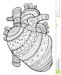 coloring free printable human anatomy pages heart colouring