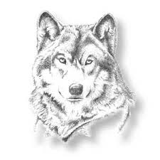how to draw a carnivorous wolf