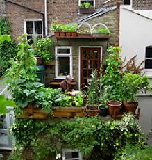 gem se pflanzen balkon vertikales gemüse gemüse anbau auf dem großstadt balkon sein de