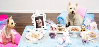 dog birthday party ideas for a great dog birthday party
