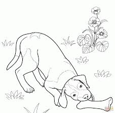 download coloring pages coloring pages of dogs coloring pages of