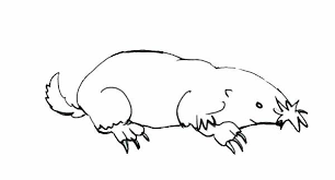 introduce mole coloring pages batch coloring