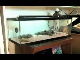 lizard terrarium adastra