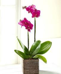 Best Flowers For Office Desk Best Flowers For Office Desk Best Flowers For Office Desk Style