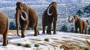 blueprint woolly mammoth quirks u0026 quarks bob