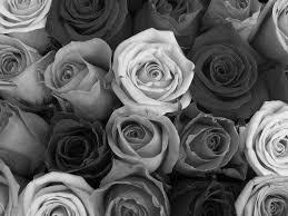 theme black rose white rose background tumblr wallpaper black and white rose my