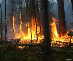 How Many Wildfires In Canada by Five Burning Questions About Forest Fires Boreal Forest Facts