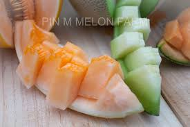 cuisine en pin pin green farm pin m melon farm ย นด ต อนร บคร บ พ ก ด