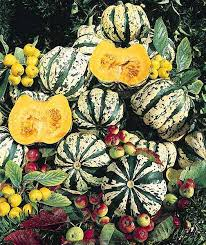 winter squash seeds for sale vegetable garden seeds