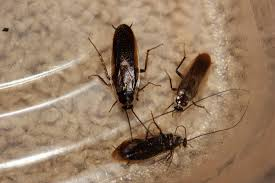 bagels u0026 suburban lake worth cited for lives roaches