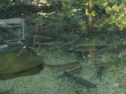 24 best pond u0026 waterfall images on pinterest pond waterfall