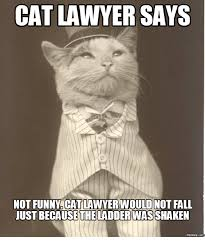 Lawyer Cat Meme - cat lawyer says not funny cat lawyer would not fall