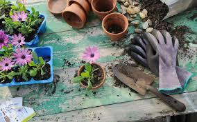 getting started as a beginner gardener