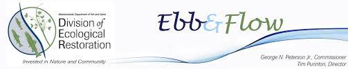 ebb u0026flow 24