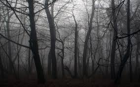 spooky background images spooky forest backgrounds 18574 1440x900 px hdwallsource com