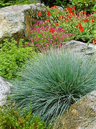 ornamental grass 101 grasses and blue colors