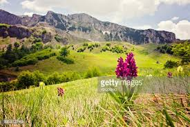 mountain backdrop orchid against rolling and mountain backdrop stock photo