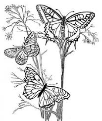 hard butterflies coloring pages adults print
