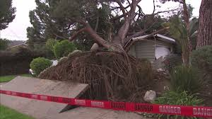 50 foot tree falls onto pasadena home concerns for another nearby