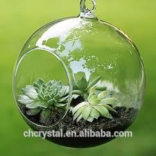 10cm glass hanging planter air plant terrarium globe container