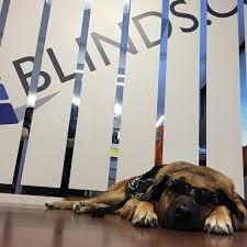 Blinds Com Review Blinds Com Careers Glassdoor