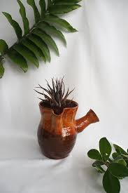 home prickle houseplants new zealand funky haworthia