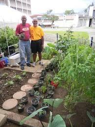 honolulu vegetable garden and greenhouse get a