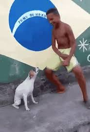Dancing Dog Meme - dancing dog gifs tenor