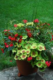 1414 best container garden images on pinterest window boxes