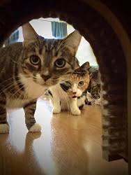 Interior Pet Door For Cats Top 3 Interior Cat Doors Under 40 Animals Small And Big