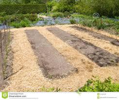 vegetable garden stock photos image 31106723